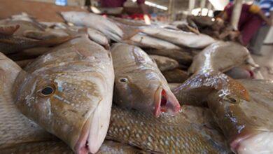 صورة تعرف على أسعار الأسماك  فى الأسواق اليوم الجمعة
