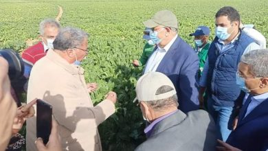 صورة الزراعة : استمرار حصاد البنجر في مشروع غرب المنيا خلال إجازة العيد وتوريد 60 ألف طن لمصانع السكر